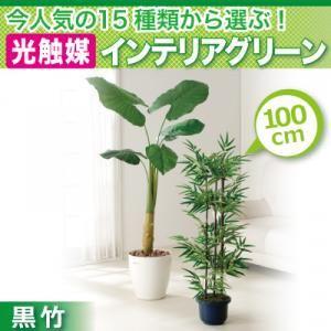 今人気の15種類から選ぶ光触媒インテリアグリーン【黒竹100】 - 拡大画像