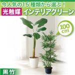今人気の15種類から選ぶ光触媒インテリアグリーン【黒竹100】