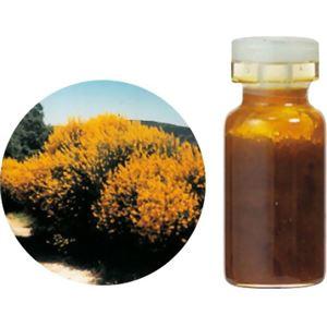 生活の木 Herbal Life 花精油 ブルーム・スパニッシュAbs. 3ml - 拡大画像
