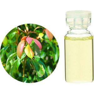 生活の木 Herbal Life ラヴィンサラ・シネオール 10ml - 拡大画像