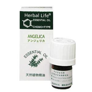 生活の木 Herbal Life アンジェリカ 3ml - 拡大画像