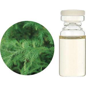 生活の木 Herbal Life 和精油 杉(葉) 3ml【2セット】 - 拡大画像