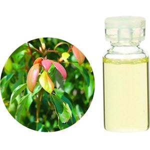 生活の木 Herbal Life ラヴィンサラ・シネオール 3ml【2セット】 - 拡大画像