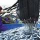 【10月31日で終了】特大トロ秋刀魚 4kg(18本〜24本) - 縮小画像4