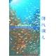 厳選!世界の海DVD4本セット+オマケ付! - 縮小画像4