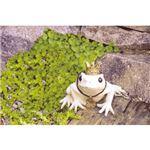 (まとめ)トード ガーデンオーナメント カエル C8058016【×3セット】
