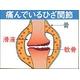 グルコサミン・サメ軟骨 - 縮小画像3