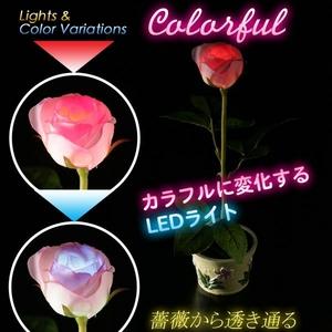 LEDソーラーライト「イルミネーションローズ」