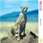 写真素材 売切り写真館 JFI48 動物たち