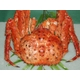 豪華!北海3大蟹セット - 縮小画像2