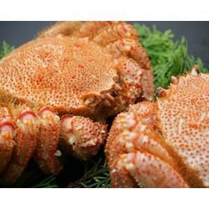 蟹ミソの王様 毛ガニ2尾セット - 拡大画像