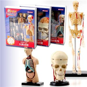 人体解剖パズル3種セット - 拡大画像