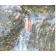 天然水で育てたこだわりのまるごとウコン 写真3