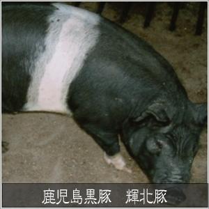 鹿児島黒豚 輝北豚 焼肉用 ばら500g