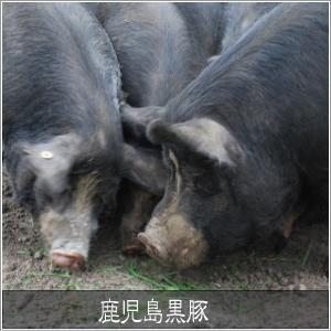 鹿児島黒豚 とんかつ用(単品) 肩ロース500g