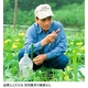 自然派スキンケア 水粧物語ソープ P.VER 【へちま洗顔ソープ】 写真6