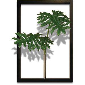 風景専門店あゆわら 《リーフパネル》F-style Tuinie (エフスタイル・ツイーニー)Philodendron bipinnatifidum(セローム ヒトデカズラ) - 拡大画像