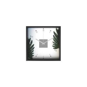 《掛時計》Philodendron  cv. kookaburra (フィロデンドロン クッカバラ) - 拡大画像