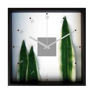《掛時計》Phormium tenax(ニューサイラン) - 拡大画像