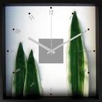 《掛時計》Phormium tenax(ニューサイラン)