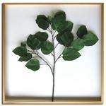 Ficus Umbellata(フィカス ウンベラータ) タイプ1