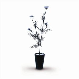 風景専門店あゆわら 《人工観葉植物・造花》Cosmos Bipinnatus(コスモス/秋ざくら) - 拡大画像
