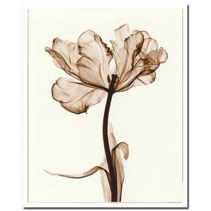 風景専門店あゆわら 《X-Ray(X線) アートフレーム》Parrot Tulips I(パーロット咲きチューリップ) Steven N.Meyers(スティーブン・マイヤーズ) - 拡大画像