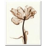 風景専門店あゆわら 《X-Ray(X線) アートフレーム》Parrot Tulips I(パーロット咲きチューリップ) Steven N.Meyers(スティーブン・マイヤーズ)