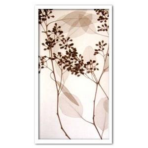 風景専門店あゆわら 《X-Ray(X線) アートフレーム》Eucalyptus III(ユーカリ) Steven N.Meyers(スティーブン・マイヤーズ)ブラウンフレーム - 拡大画像