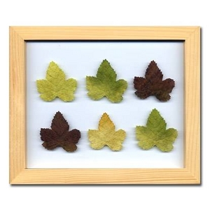風景専門店あゆわら 《プラント アートフレーム》Grape Leaf(グレープリーフ) - 拡大画像
