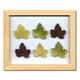 風景専門店あゆわら 《プラント アートフレーム》Grape Leaf(グレープリーフ) - 縮小画像1