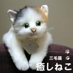 癒しねこ ミケ 〈目明き〉