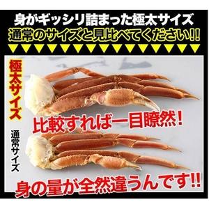 【訳あり】生ずわい蟹 極太 5kg 【15肩前後入り】