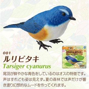 愛鳥倶楽部 ヒーリングバード01 ルリビタキ - 拡大画像