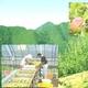 【訳あり】紀州南高梅・はねだし梅ハチミツ 500g×4 写真6