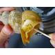 香住港のお惣菜 味付白ばい貝(むき身)4袋入り 写真3