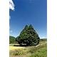 山形県鮭川村産はえぬき 10kg 写真1