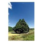 山形県鮭川村産はえぬき 10kg