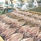 沼津「奧和」のひもの詰合せ5種(10枚)あじ、さんま、かます、金目鯛、えぼ鯛 写真5