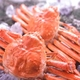 【身入り抜群のA級品!】カナダ産ボイルズワイガニ姿・約500g×2尾 冷凍ズワイ蟹 - 縮小画像1