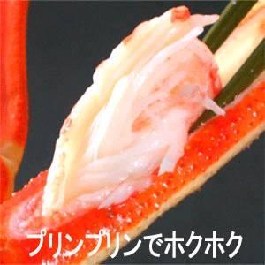 【身入り抜群のA級品!】カナダ産ボイルズワイガニ姿・約500g×2尾-5
