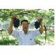 【9月30日で終了】長野県産ぶどう(ナガノパープル) 2kg(約5〜6房) 写真6