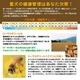 愛犬の健康を守る天然のサプリメント『ローヤルゼリー・ワン』×3 お留守番用DVDセット 写真3