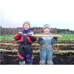 自然薯(2本セット 1200〜1400g) 画像1