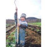 自然薯(2本セット 1200〜1400g) 画像2