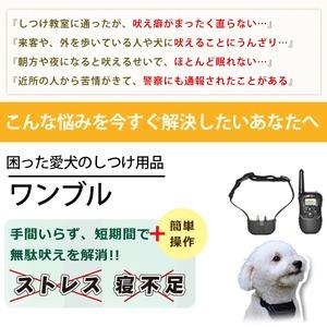 無駄吠え防止!ワンブル(リモコン電池4個付き)【犬 しつけ用首輪】 - 拡大画像