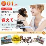 洗えるペットシーツ「ワンマー」 【犬用 おしっこシート トイレ用品】