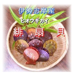 伊勢志摩産 緋扇貝(ヒオウギガイ) 50ヶ