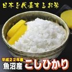 【平成22年産 味と価格に自信アリ!】魚沼産こしひかり 白米10Kg(5kg×2)
