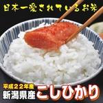 平成22年産新米 味と価格に自信アリ! 新潟県産こしひかり 白米10Kg(5kg×2)